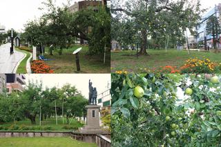 りんご並木.jpg